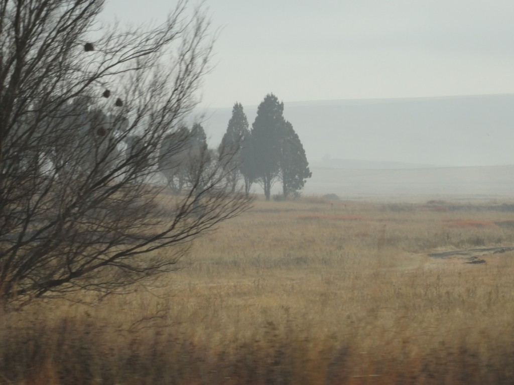 The beautiful landscape of Mpumalanga outside Vrede on this misty, chilly morning. Photographer: Johanna Heuren