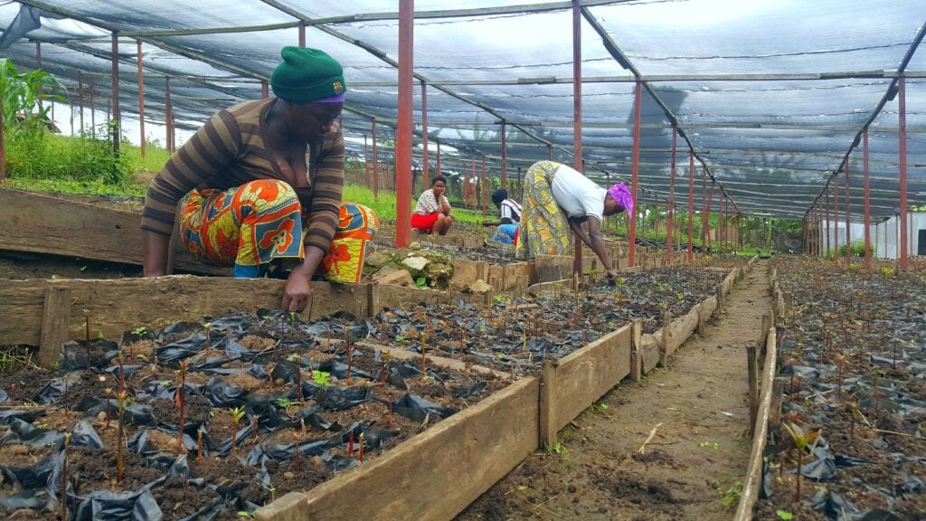 One Acre Fund Tree Nursery Rwanda