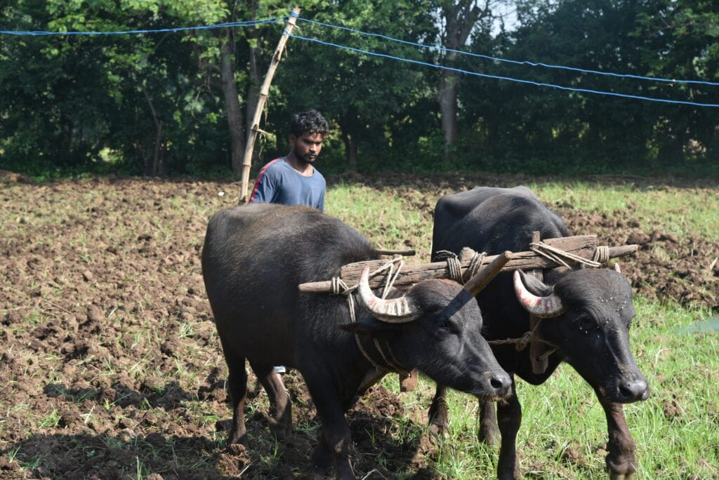 Commonland India Agroforestry restore degraded landscape